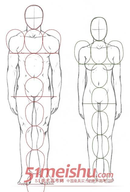 素描速写人体比例结构.jpg