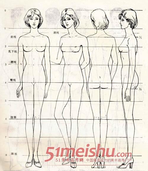 素描速写人体比例结构-女性结构图1.jpg